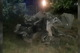 На Днепропетровщине Opel врезался в дерево: водитель погиб
