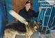 В Днепре патрульные нашли потерявшуюся собаку