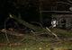В Кривом Роге велосипедиста убило стволом дерева