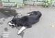 Патрульные спасли травмированного автомобилем щенка и отвезли его в ветклинику