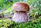 С начала грибного сезона на Днепропетровщине уже 10 случаев отравления