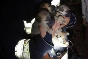 В Днепре спасатели вызволили из ловушки маленьких щенков