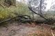 В Днепре спасатели убрали дерево, упавшее на проезжую часть