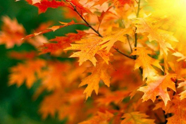 В Украине под деревьями в парках больше не будут убирать листья