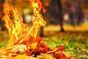 Если увидели где-то как палят листья – не молчите и звоните в полицию