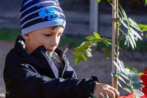 Дніпро_квітучий: более 1500 молодых деревьев высадят ученики, родители и педагоги на территории школ и внешкольных учреждений города