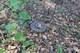 На Днепропетровщине мужчина, собирая грибы в лесу, нашел современную противотанковую мину