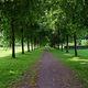 Жителей Днепра приглашают поучаствовать в озеленении городских парков