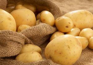 В 2018 году в Днепропетровской области собрали более полумиллиона тонн картофеля