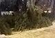 В Днепре несовершеннолетние украли 4 елки