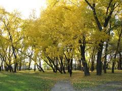 Сагайдак (Воронцова) парк