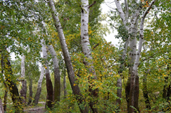 Что посмотреть - Диевский лесопарк
