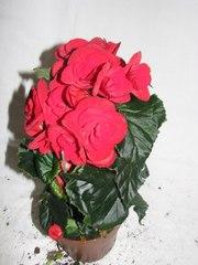 Магазины - Магазин комнатных цветов