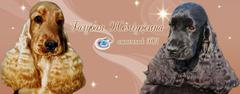 Увлечения - Голубая Жемчужина (Golubaya Zhemchuzhina), питомник