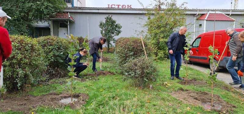 Команда КОД присоединилась к городской комплексной программе по озеленению города